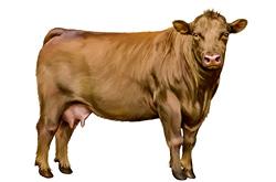 Sai riconoscere i tagli della carne